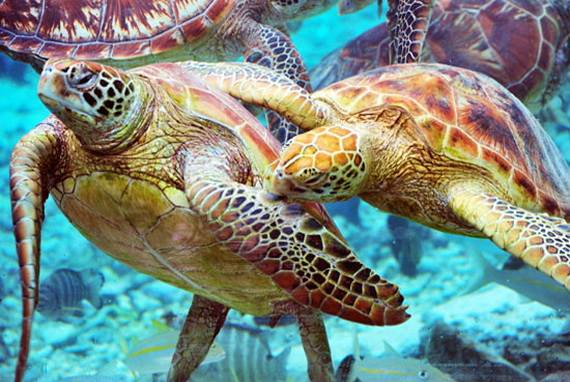 Best-Overwater-Bungalows-In-Tahiti-Le-Meridien-Bora-Bora-_26