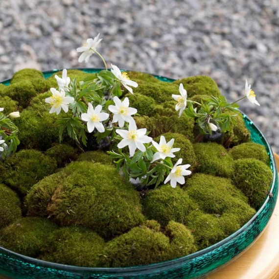 Fresh Spring Decorations Ideas - Decorate And Tinker With Moss_60