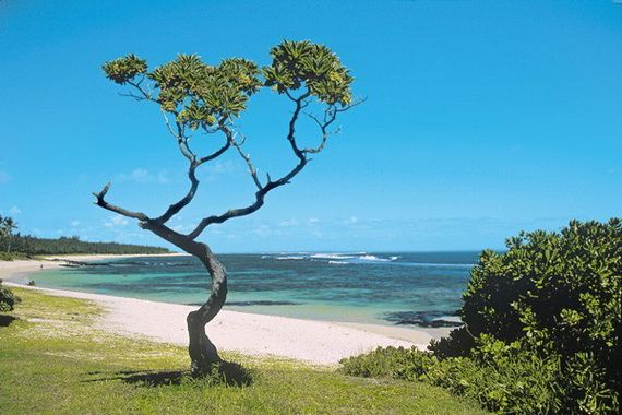 Discover The Magic Of Mauritius An Island Of Emotion _59