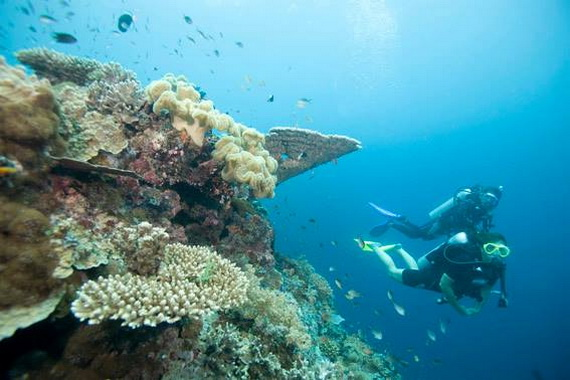 Sea Adventures- Explore the depths of the sea in Malaysia_03