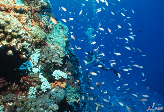 Sea Adventures- Explore the depths of the sea in Malaysia_24