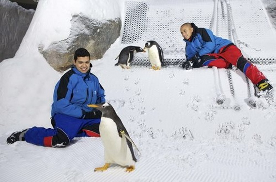 Unbelievable Family Holiday in Dubai (Ski Dubai)_02