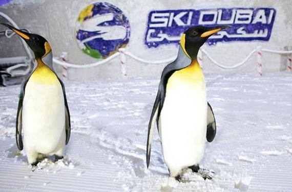 Unbelievable Family Holiday in Dubai (Ski Dubai)_10