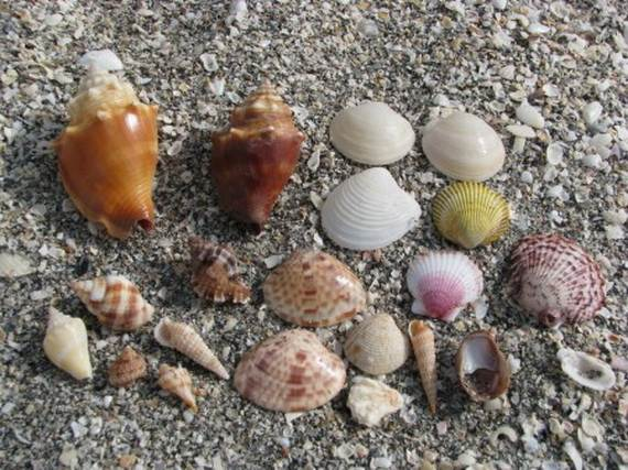 Sanibel-Island-Florida-The-Sea-Shell-Capital_07