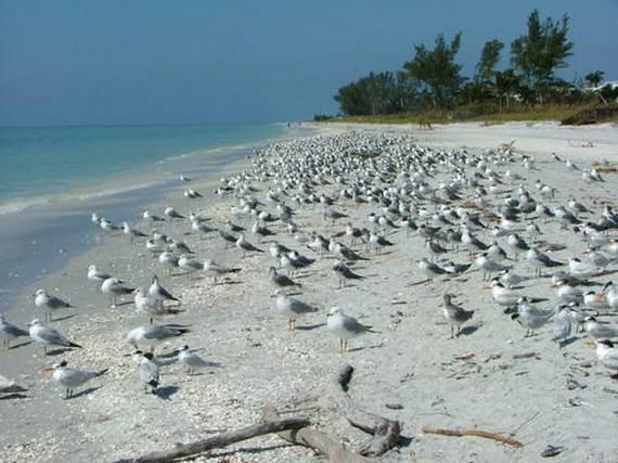 Sanibel-Island-Florida-The-Sea-Shell-Capital_10