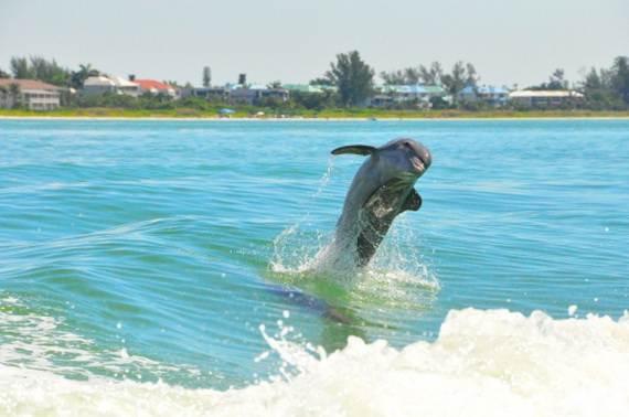 Sanibel Island Florida The Sea Shell Capital Family