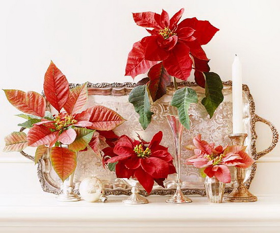 Decorate Christmas with 45 ideas poinsettias the holidays' most loved  plant_01 - Decorate Christmas With 45 Ideas Poinsettias The Holidays' Most