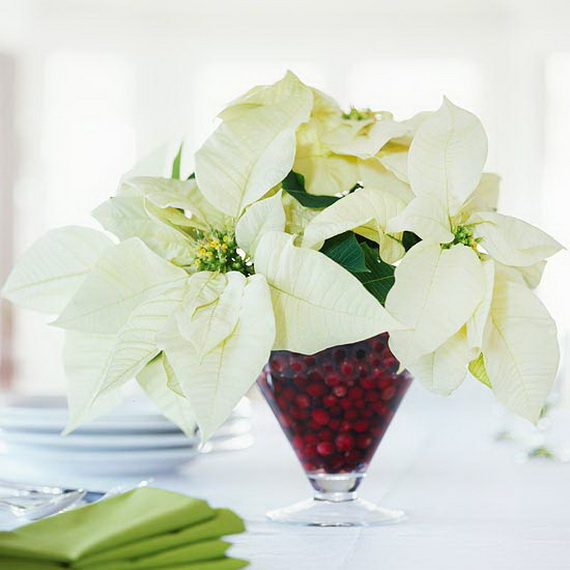 Decorate Christmas with 45 ideas poinsettias the holidays' most loved plant_19