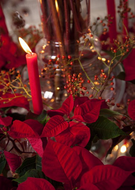 Decorate Christmas with 45 ideas poinsettias the holidays' most loved plant_23