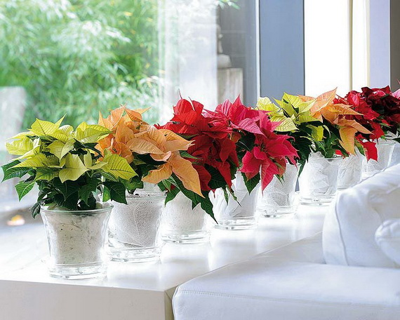 Decorate Christmas with 45 ideas poinsettias the holidays' most loved plant_38