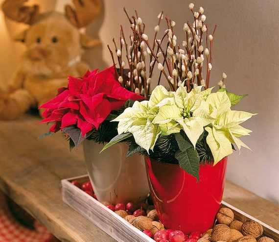 Decorate Christmas with 45 ideas poinsettias the holidays' most loved plant_41
