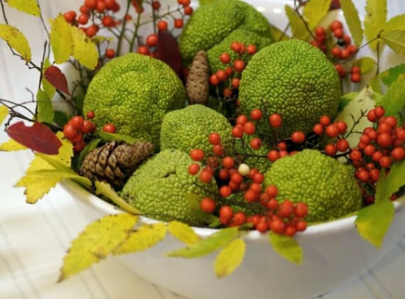 Get Stylish with Fall Decorating Ideas and Holidays (11)