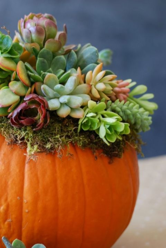 New Ways to Decorate Your Halloween Pumpkins (48)