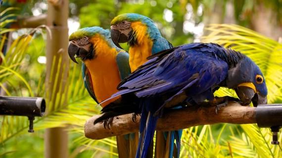 Jungle Island Miami  (1)