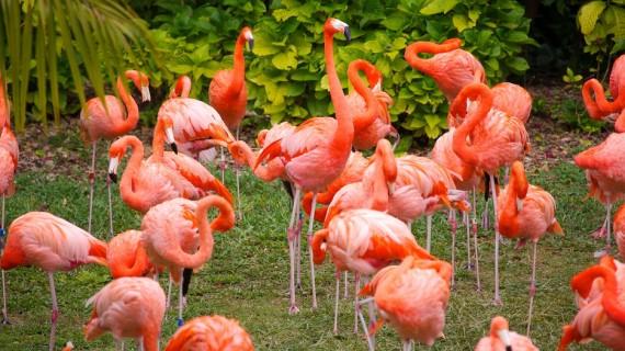 Jungle Island Miami (8)