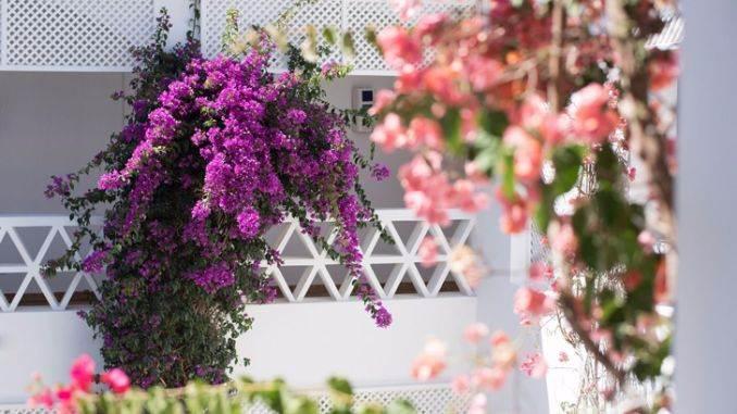 Vila Monte Farm House (4)