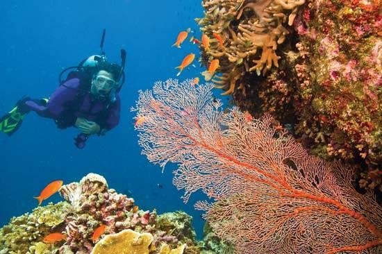 australia-great-reef-barrier-11