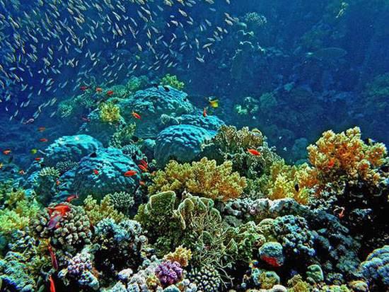 australia-great-reef-barrier-12