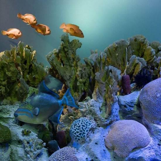 australia-great-reef-barrier-13