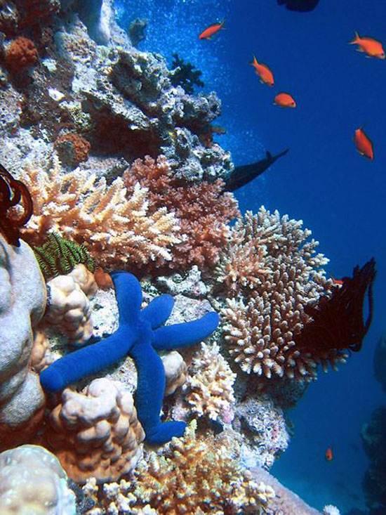 australia-great-reef-barrier-15