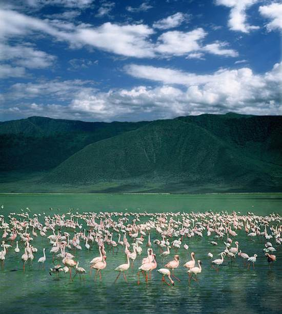 Ngorongoro Crater The Garden of Eden in Africa Tanzania (4)