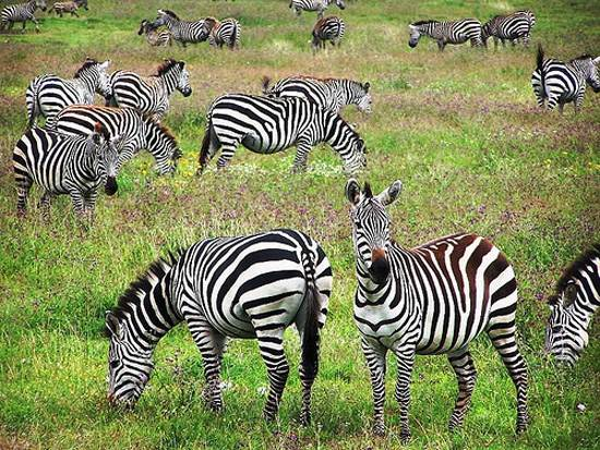 Ngorongoro Crater The Garden of Eden in Africa Tanzania (7)