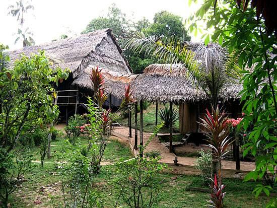 peruamazonrainforest