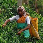 Traveling to  India  Kerala