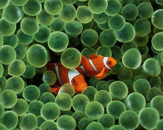 australia-great-barrier-reef-national-treasure-10