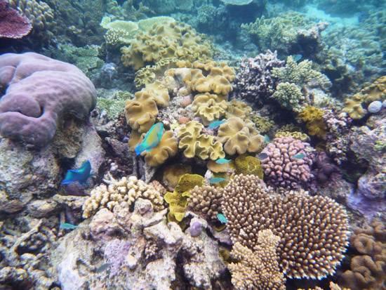 australia-great-barrier-reef-national-treasure-14