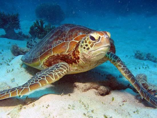 australia-great-barrier-reef-national-treasure-4
