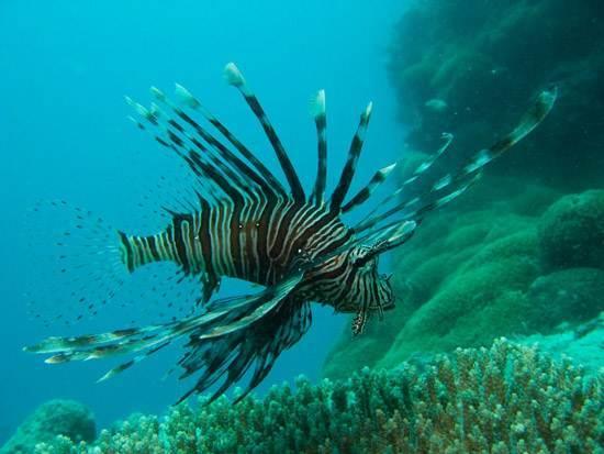 australia-great-barrier-reef-national-treasure-7
