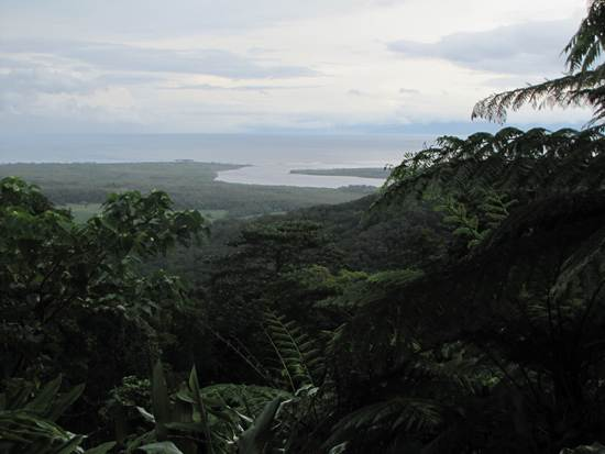daintree-the-oldest-continuously-living-rain-forest-15