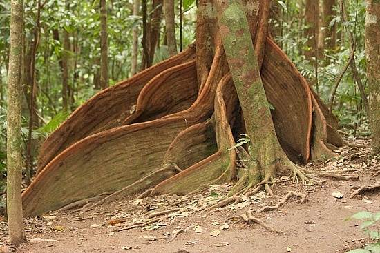 daintree-the-oldest-continuously-living-rain-forest-8