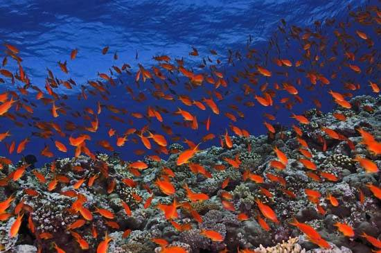 egypt-red-sea-red-land-7