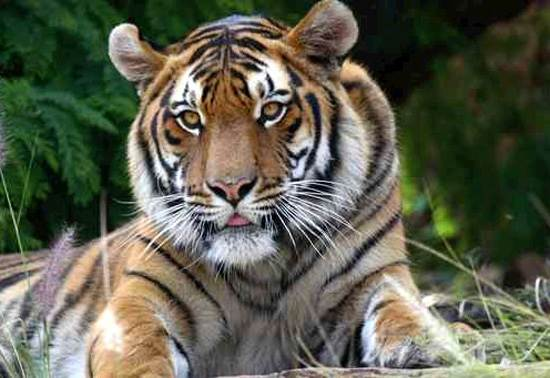 india-corbett-national-park-tiger-reserve-3