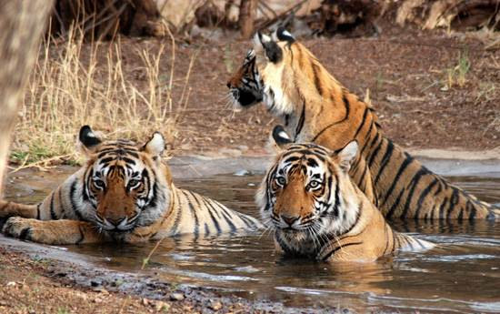 Traveling to India Corbett National Park   Tiger Reserve