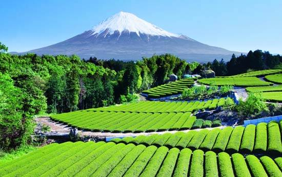 japan-mount-fuji-the-holy-mountain-4