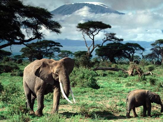 mount-kilimanjaro-mountain-of-light-41