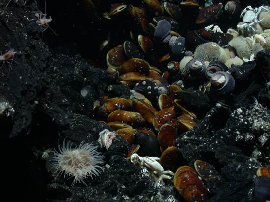ocean-floor-deep-sea-vents-7