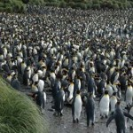 Traveling to Macquarie Island  Oceanic Island