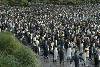 Traveling to Macquarie Island  Oceanic Island