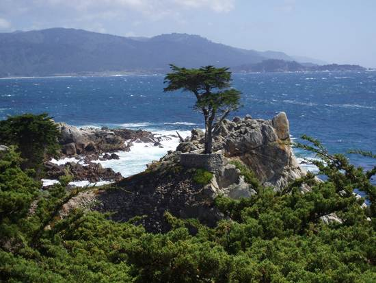 most-unique-trees-in-the-world-loen-cypress-monterey-1