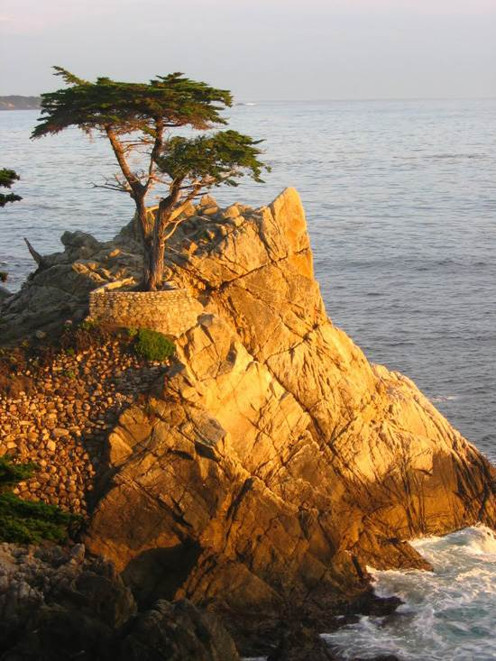 most-unique-trees-in-the-world-loen-cypress-monterey-2
