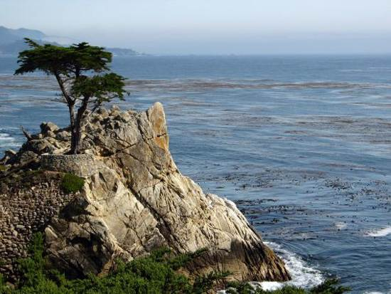most-unique-trees-in-the-world-loen-cypress-monterey-3