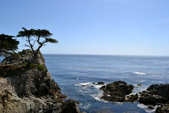 most-unique-trees-in-the-world-loen-cypress-monterey-6
