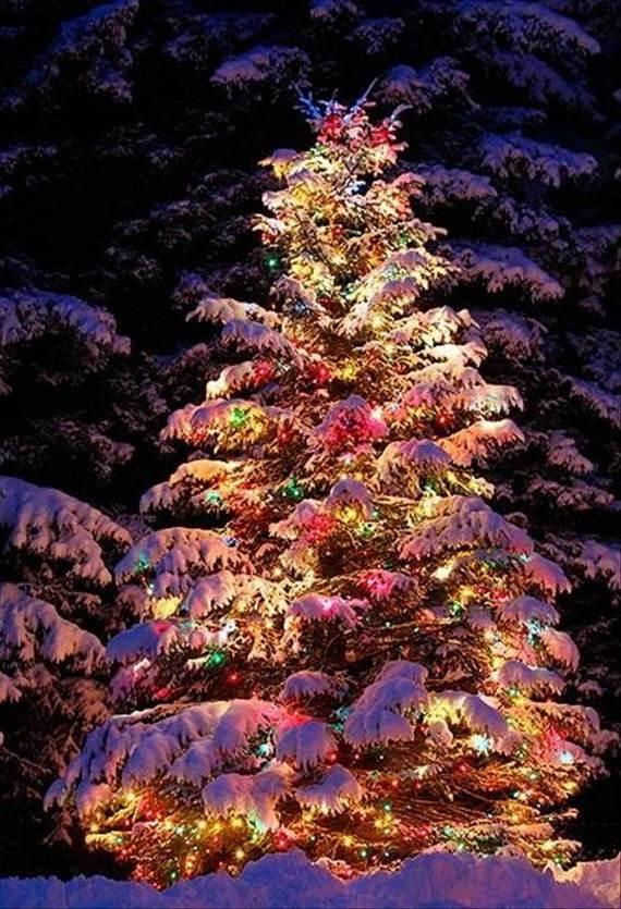 Fantastic-Christmas-Holiday-Lights-Display_07