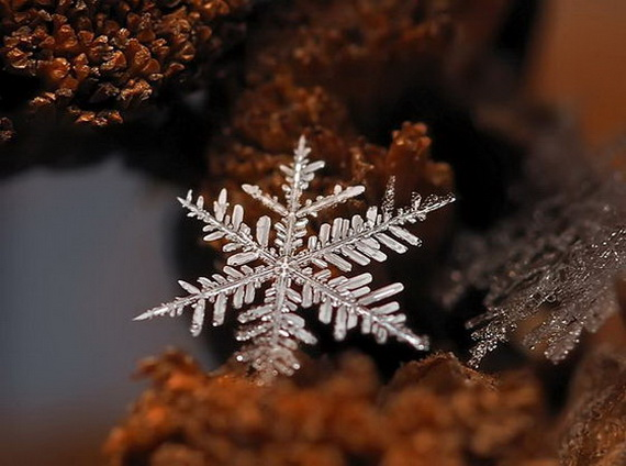 Snowflakes and Snow Crystals_04