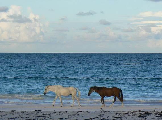 Pink-Sand-Beach-in-Harbour-Island-Bahamas-_09