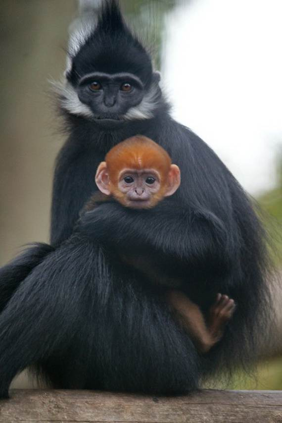 Mother-Day-The-Beauty-Of-Motherhood-In-The-Animal-Kingdom-_011
